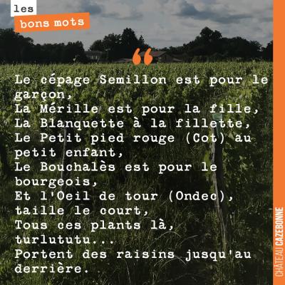 Chanson comprenant des noms de cépages du Lot et Garonne, citée par Marcel Lacroix, dans un ouvra...