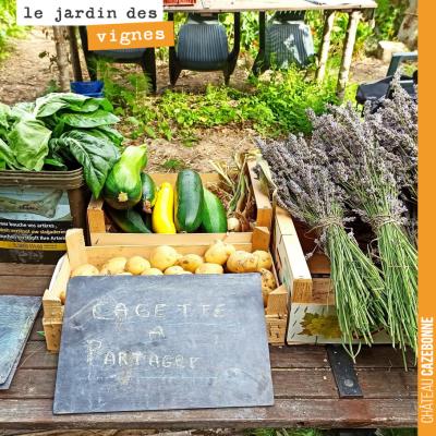 Francis nous avait proposé à Cazebonne de cultiver des légumes dans les vignes. De retour dans sa...