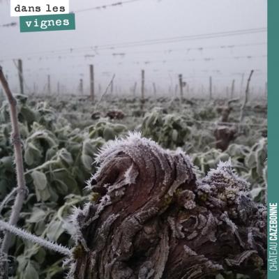C'est beau un cep de vigne dans le gel de l'hiver.