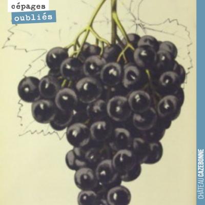 Inscrivez vous sur notre site pour recevoir le Livre de l'histoire des cépages de Bordeaux, oubli...