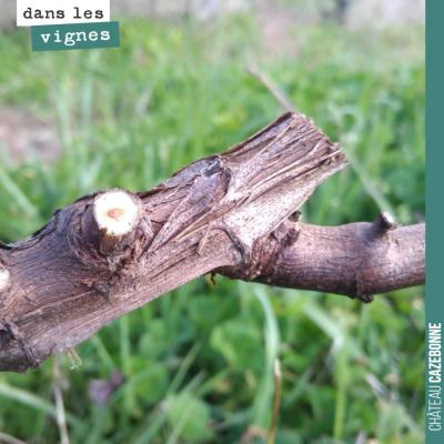 La taille de la vigne est essentielle. À la fois parce qu'elle détermine la quantité de récolte q...