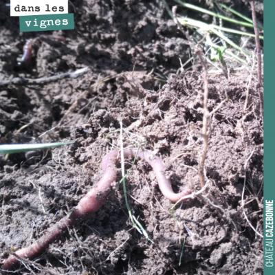 En soulevant une motte de terre, retrouver trois vers de terre. Se battre pour des sols vivants e...