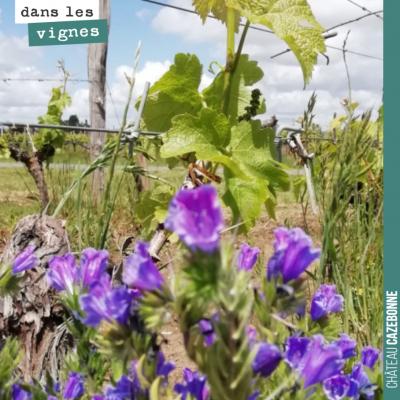 Bouquet de vipérines dans nos vignes. Biodiversité toujours !
